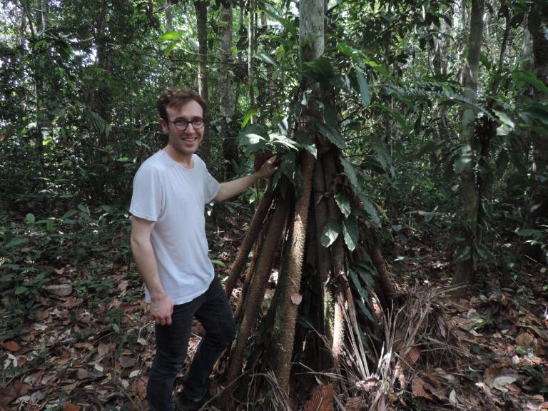 Walking palm (Socratea exorrhiza)